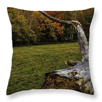 Old Tree Trunk Throw Pillow