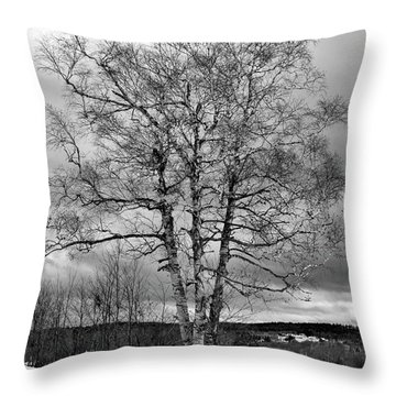 Old White Birch Throw Pillow