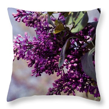 Throw Pillow featuring the photograph Old World Lilac by Cathy Donohoue