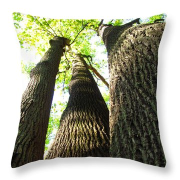 Oldgrowth Tulip Tree Throw Pillow