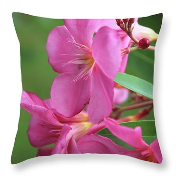 Oleander Maresciallo Graziani 2 Throw Pillow
