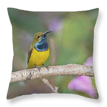 Olive-backed Sunbird Throw Pillow