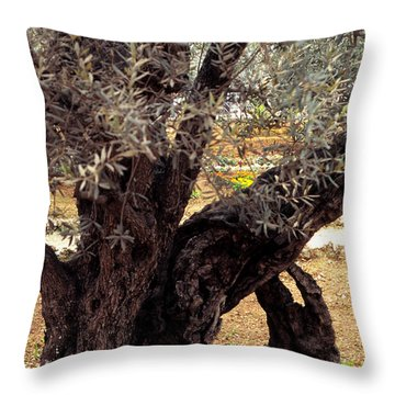 Olive Tree In The Garden Of Gethsemane Throw Pillow by Thomas R Fletcher