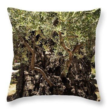 Throw Pillow featuring the photograph Olive Tree by Mae Wertz
