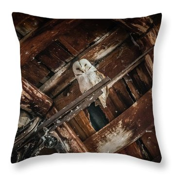 Olsen Barn Owls Throw Pillow by Jan Davies