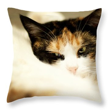 Throw Pillow featuring the photograph On A Furry Pillow by Laura Melis