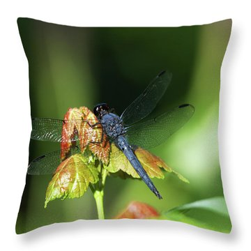 On A Leaf Throw Pillow by Karol Livote