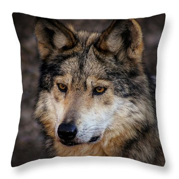 Throw Pillow featuring the photograph On Alert by Elaine Malott