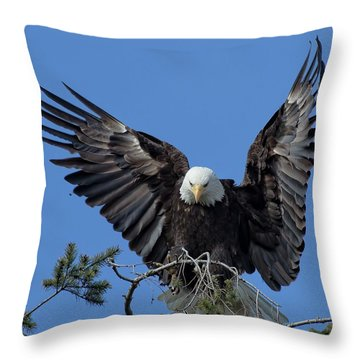On Display Throw Pillow by Sheldon Bilsker