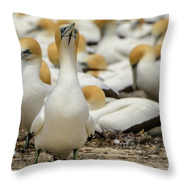 Throw Pillow featuring the photograph On Guard by Werner Padarin