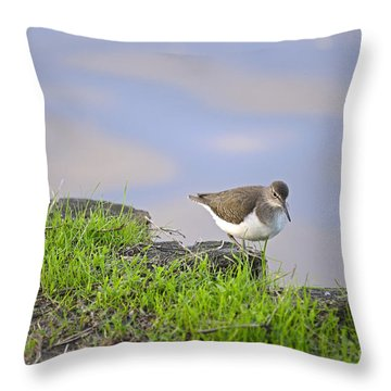 On The Banks Of The Yarkon Throw Pillow