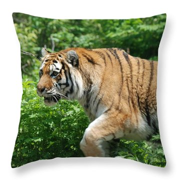 Throw Pillow featuring the photograph On The Prowl by Richard Bryce and Family