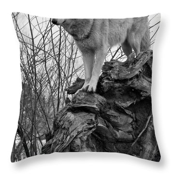 Throw Pillow featuring the photograph On Top by Shari Jardina