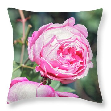 Throw Pillow featuring the photograph One Bold, One Bashful by Linda Lees