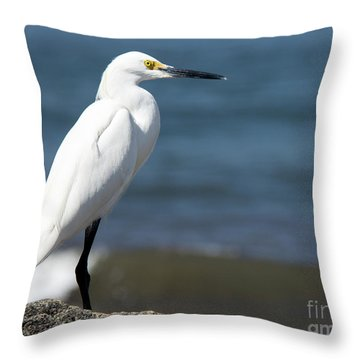 One Classy Chic Wildlife Art By Kaylyn Franks Throw Pillow