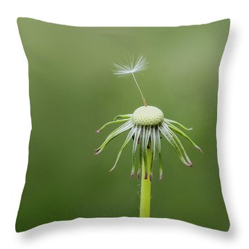 Throw Pillow featuring the photograph One Dandy by Bess Hamiti