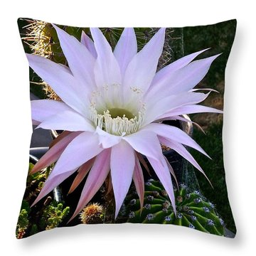 One Day Wonder Throw Pillow by Amelia Racca