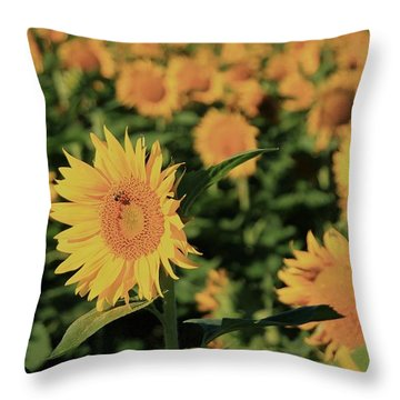 Throw Pillow featuring the photograph One In A Million Sunflowers by Chris Berry