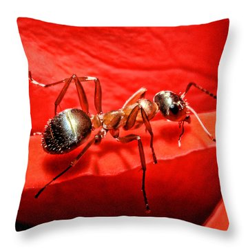 One Soldier Throw Pillow by Lawrence Christopher