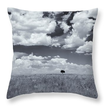 One Tree Throw Pillow by Carolyn Dalessandro