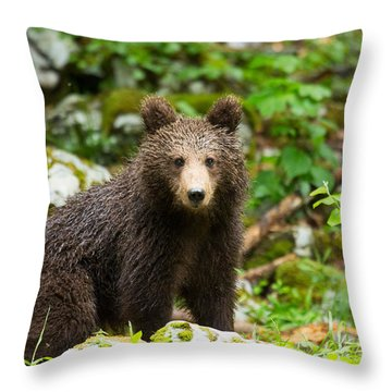 Throw Pillow featuring the photograph One Year Old Brown Bear In Slovenia by Ian Middleton