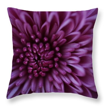 Throw Pillow featuring the photograph Purple Mum by Glenn Gordon
