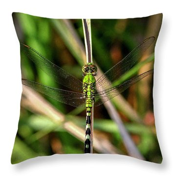 Throw Pillow featuring the photograph Openminded Green Dragonfly Art by Reid Callaway