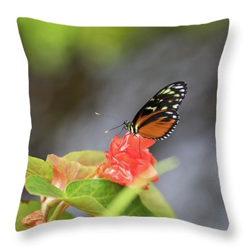 Orange And Black Butterfly Throw Pillow