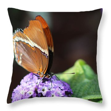 Orange And Brown Butterfly On Purple Throw Pillow