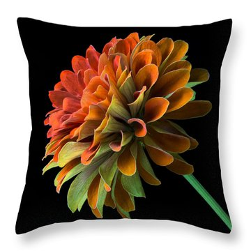 Orange And Green Zinnia  Throw Pillow