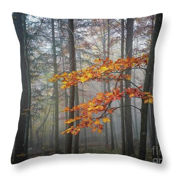 Throw Pillow featuring the photograph Orange And Grey by Elena Elisseeva