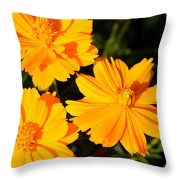 Throw Pillow featuring the photograph Cosmos Trio by Sheila Brown