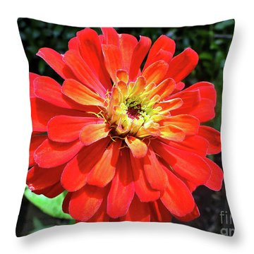 Orange Burst Zinnia Throw Pillow by Sue Melvin