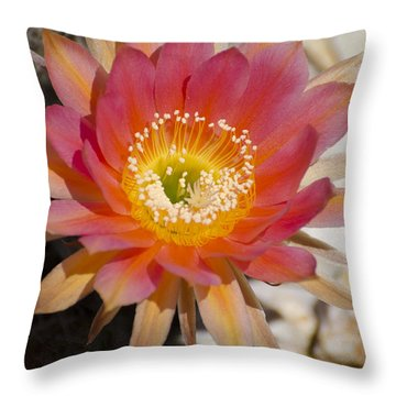 Orange Cactus Flower Throw Pillow by Jim And Emily Bush
