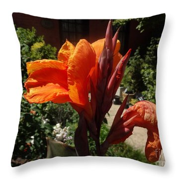 Throw Pillow featuring the photograph Orange Canna Lily by Rod Ismay
