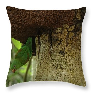 Orange -chinned Parakeet  On A Termite Mound Throw Pillow