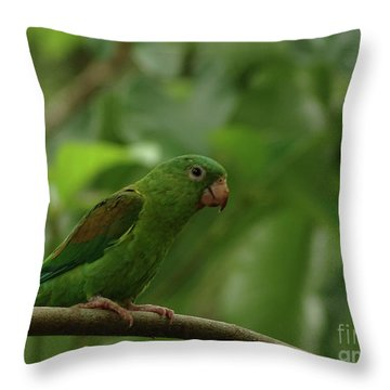 Orange-chinned Parakeet  Throw Pillow