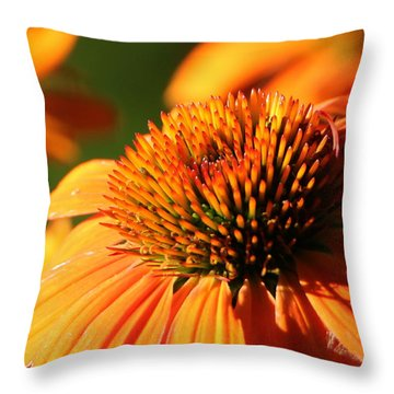 Orange Coneflower At First Light Throw Pillow