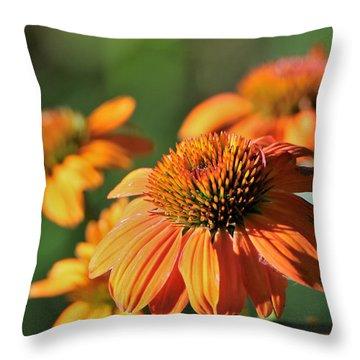 Orange Cone Flowers In Morning Light Throw Pillow