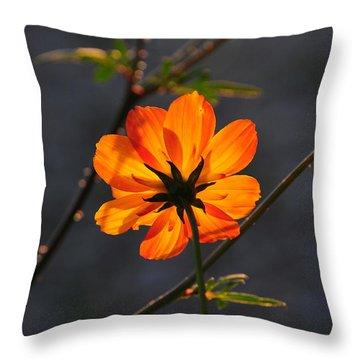 Orange Cosmo Throw Pillow