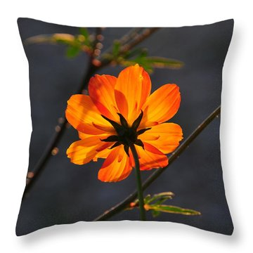 Throw Pillow featuring the photograph Orange Cosmo by Susie Rieple