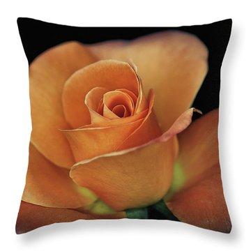 Orange Cream Throw Pillow by Elaine Malott