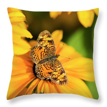 Orange Crescent Butterfly Throw Pillow by Christina Rollo