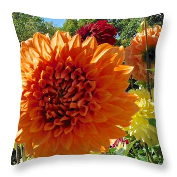 Orange Dahlia Suncrush  Throw Pillow