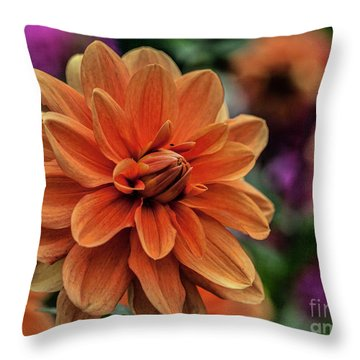 Orange Dahlias Throw Pillow