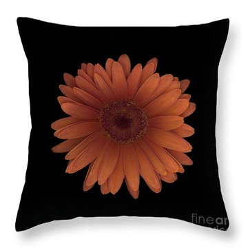 Orange Daisy Front Throw Pillow by Heather Kirk