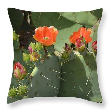 Orange Dream Cactus Throw Pillow by Aimee L Maher Photography and Art Visit ALMGallerydotcom