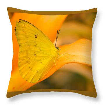 Orange Emigrant Butterfly Throw Pillow