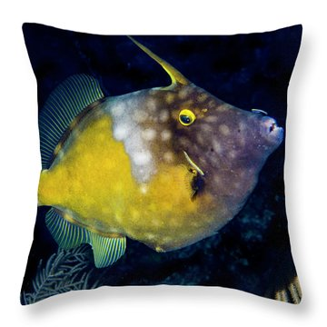Throw Pillow featuring the photograph Orange Filefish by Jean Noren