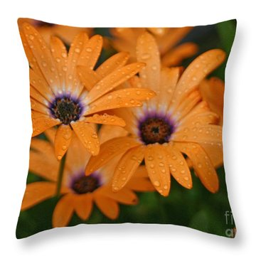 Orange Gazania Throw Pillow